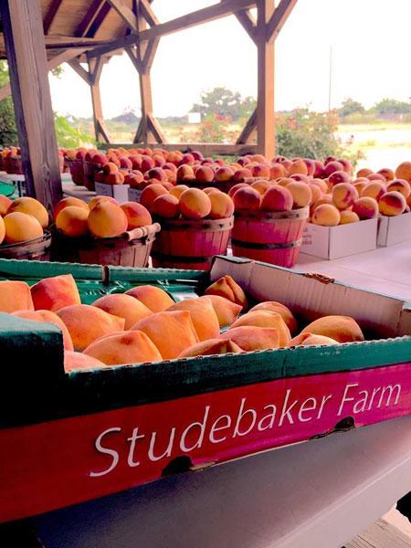 Studebaker-Farm