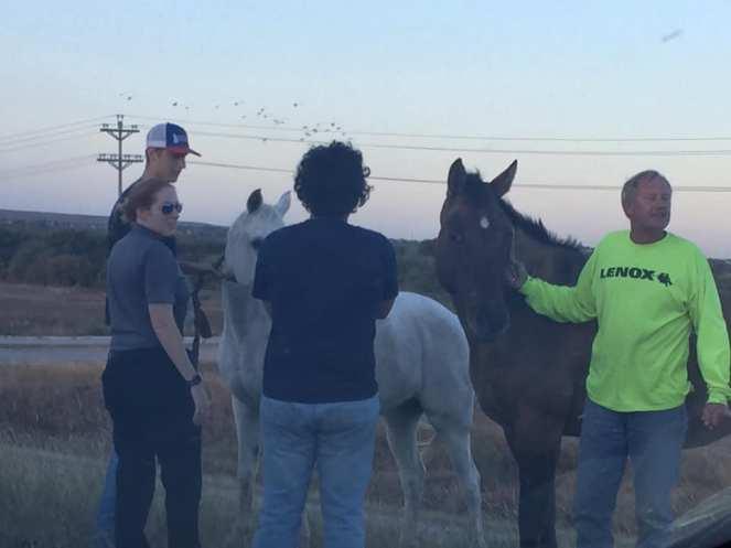 Reid Horses 2